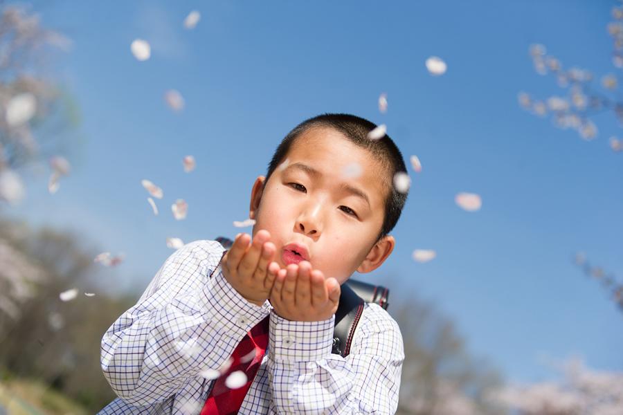 入学の桜ロケーション撮影