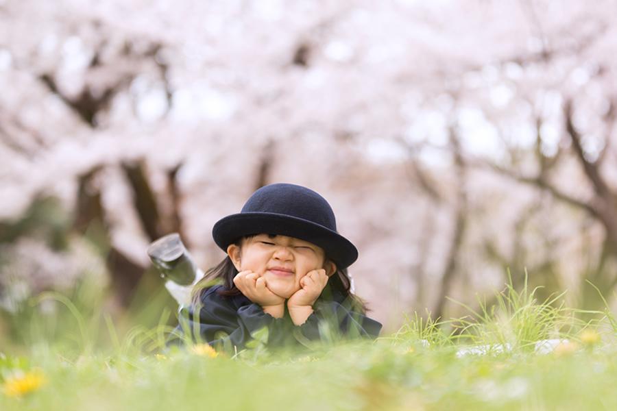入園の桜ロケーション写真
