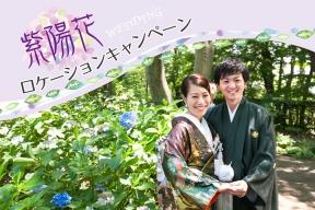 紫陽花ウェディングロケフォトフェア!